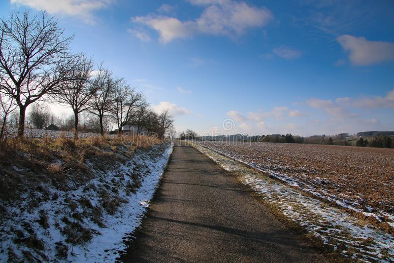 领域树之间的冬天道路 免版税库存照片