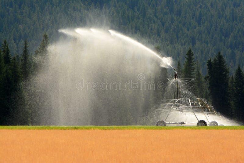 领域灌溉,水教规 库存图片