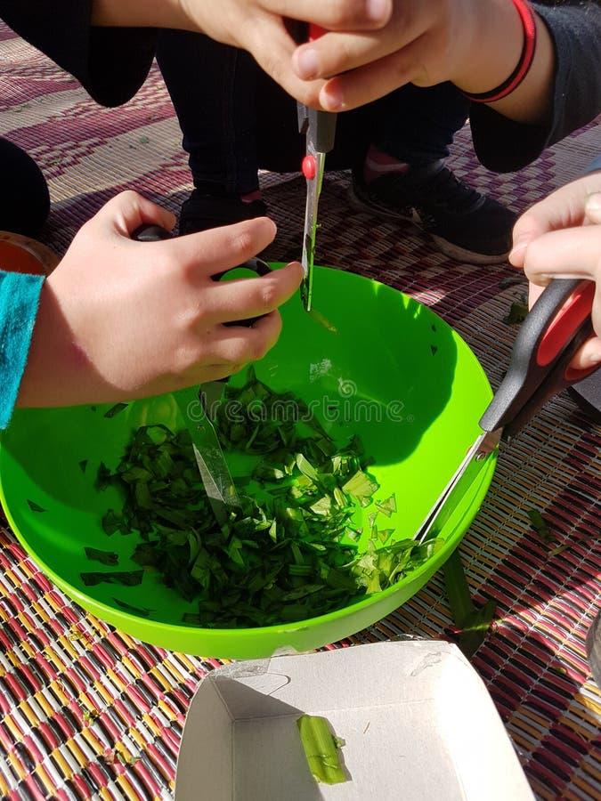 领域烹调的准备-孩子递切开肠的食用植物 免版税图库摄影