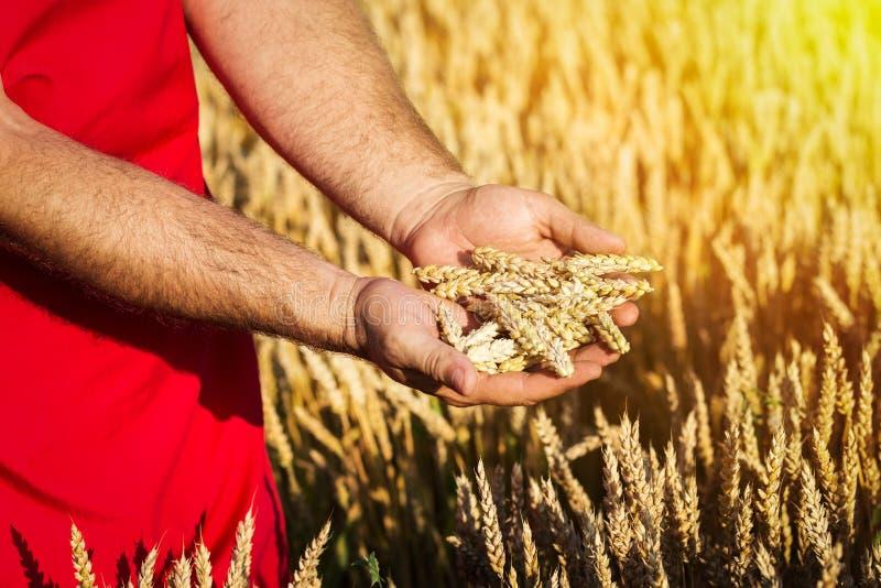 领域的农夫 免版税图库摄影