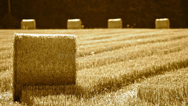 领域的干草堆 免版税库存照片