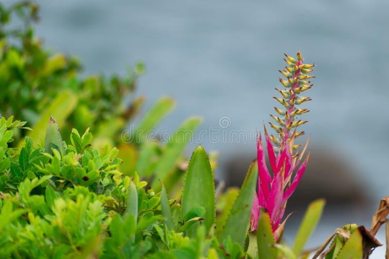 领域的野生植物小花和叶子在乌拉圭 免版税库存图片