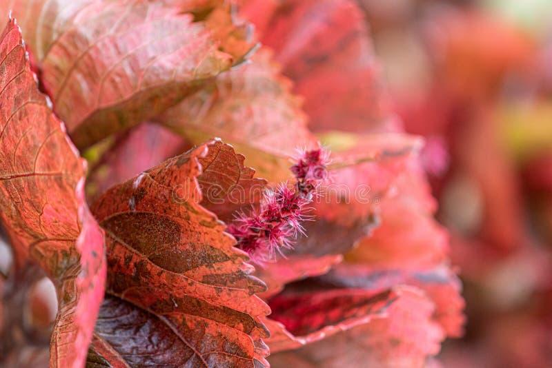 领域的野生植物小花和叶子在乌拉圭 免版税库存照片