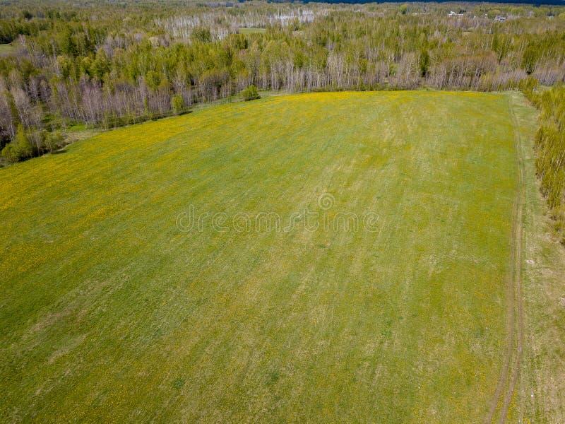 领域的鸟瞰图与绿草和黄色蒲公英的没有人和垃圾与森林和树 健康和 库存照片