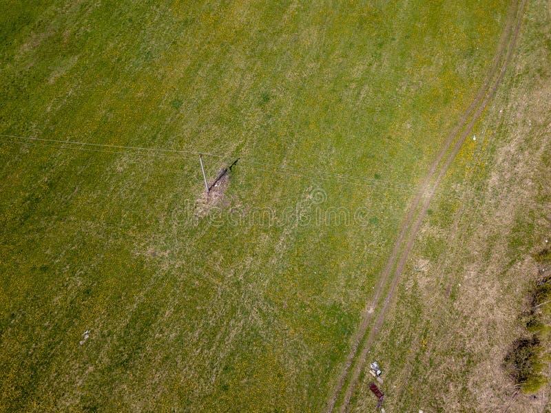 领域的鸟瞰图与绿草和黄色蒲公英的没有人和垃圾 健康和自然 图库摄影