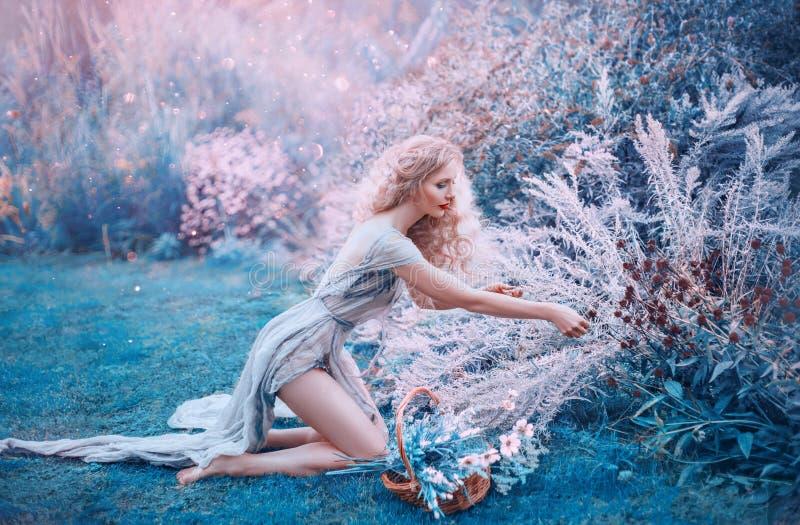 领域美人鱼收集草本和花在小篮子 苗条森林若虫坐她的在长的轻的礼服的膝盖 免版税库存图片