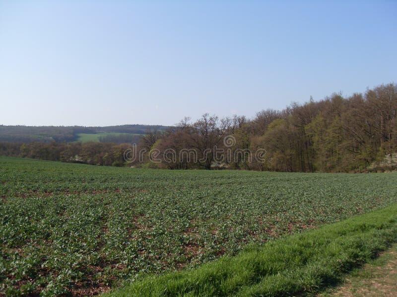 领域草甸林木农业背景天空草秋天褐色绿色 库存图片