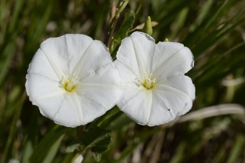 领域野生植物开花 库存照片