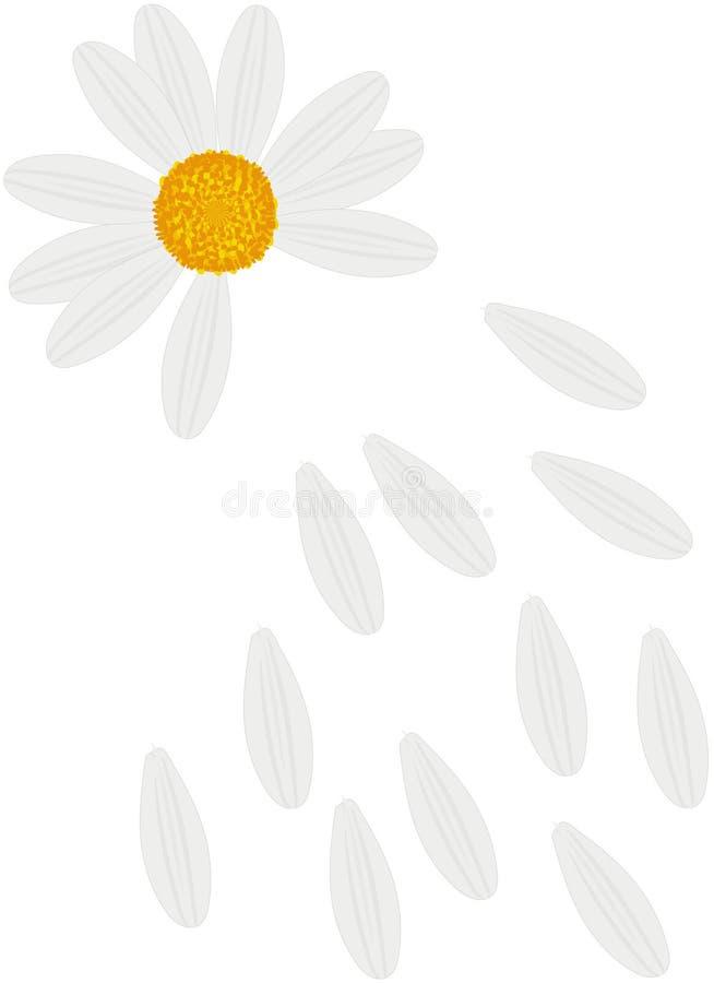 领域雏菊丢失的瓣 库存例证