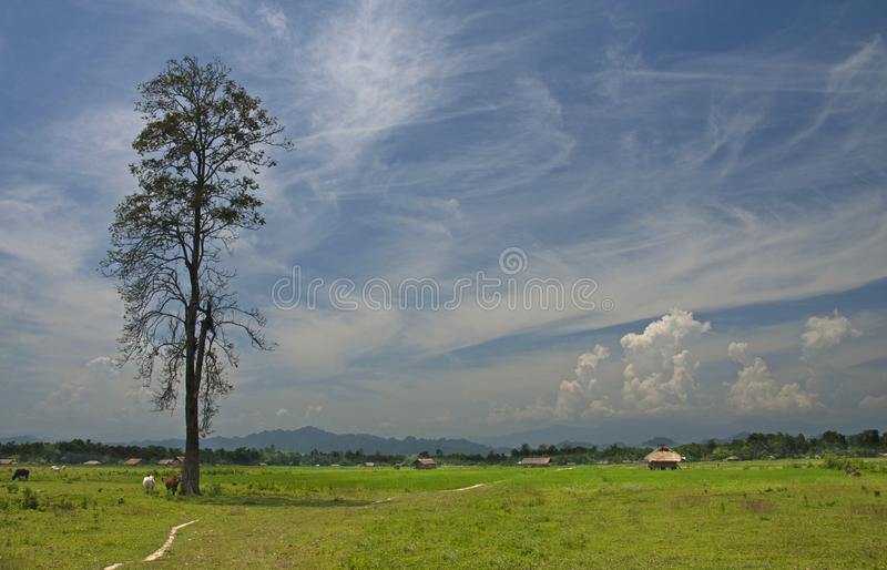 领域风景视图在阿萨姆邦,阿鲁纳恰尔邦的边界,阿萨姆邦,印度 库存照片