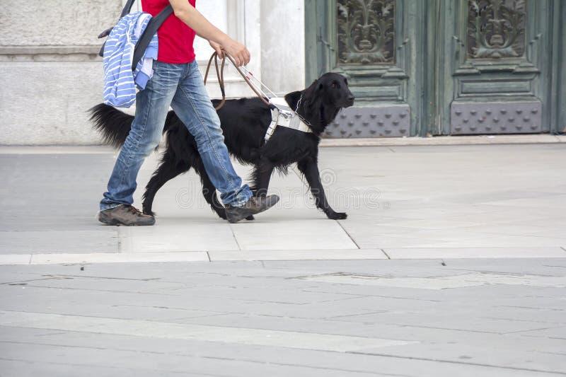 领路狗帮助一个盲人 免版税库存图片