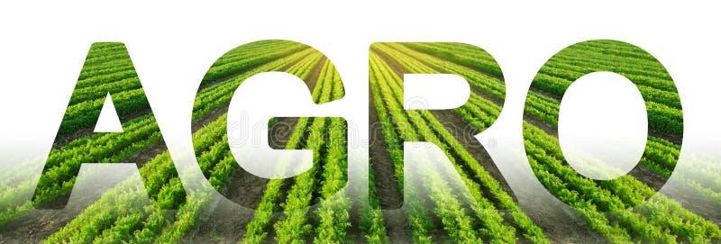 题字农业在红萝卜种植园领域的背景 r 工农业 集成的解决方案 库存图片