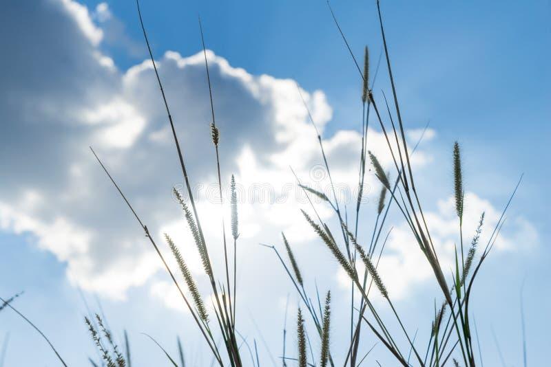 题词草发光后边与明亮的蓝色sk的太阳那光 免版税库存图片