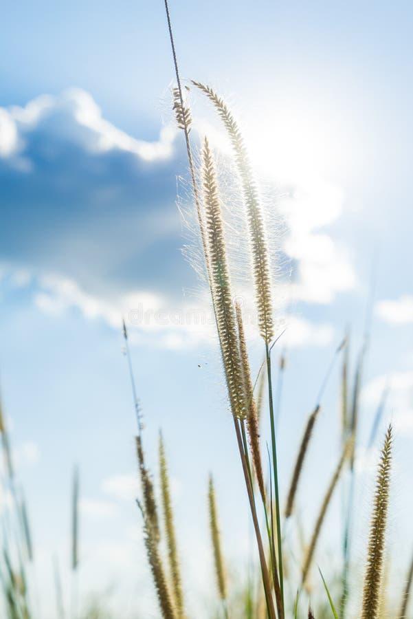 题词草发光后边与明亮的蓝色sk的太阳那光 图库摄影