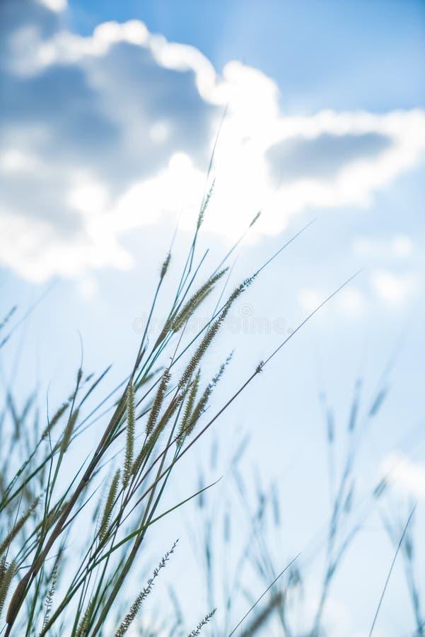 题词草发光后边与明亮的蓝色sk的太阳那光 免版税图库摄影
