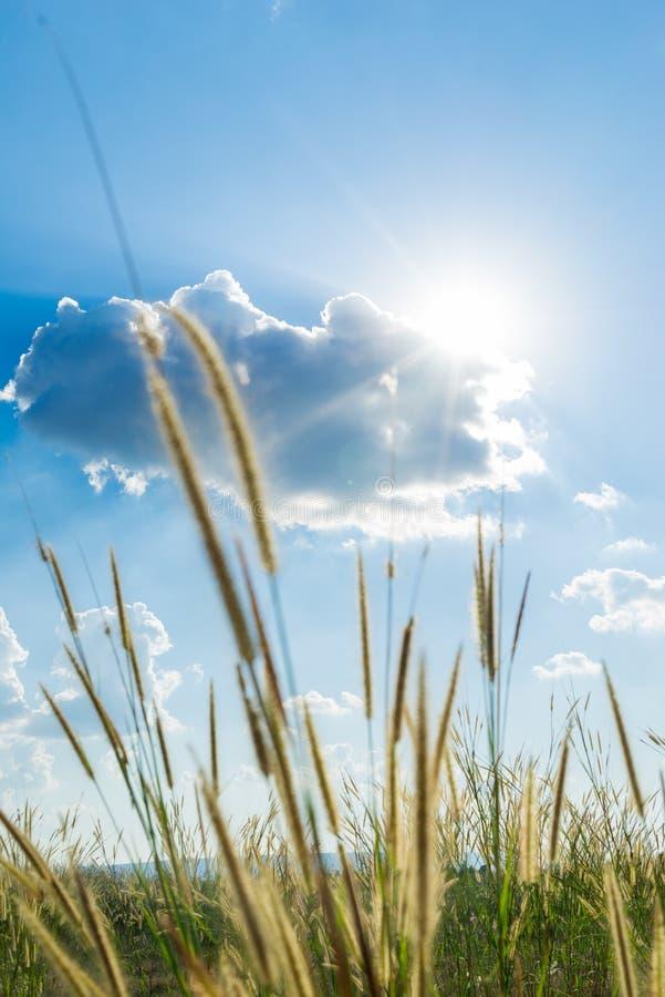 题词草发光后边与明亮的蓝色sk的太阳那光 库存图片