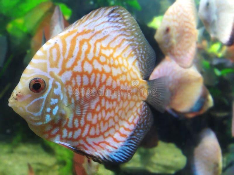 颜色充分的鱼 库存照片