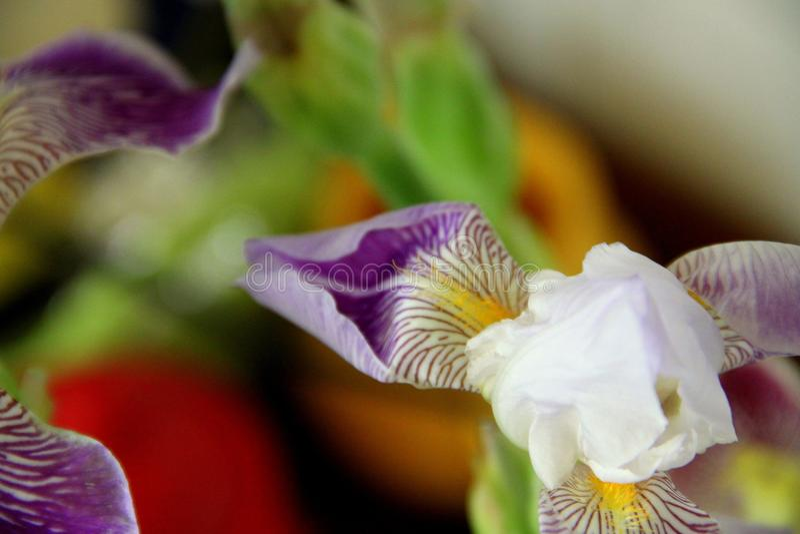 颜色和花抽象 免版税库存图片