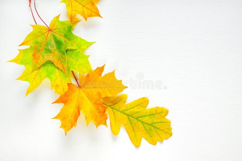 颜色在白色背景的秋叶 库存照片