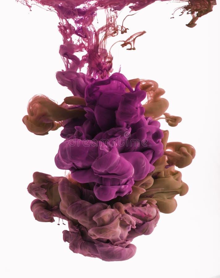 颜色墨水下落在水中 流行粉红,桔子,洋红色 免版税库存照片