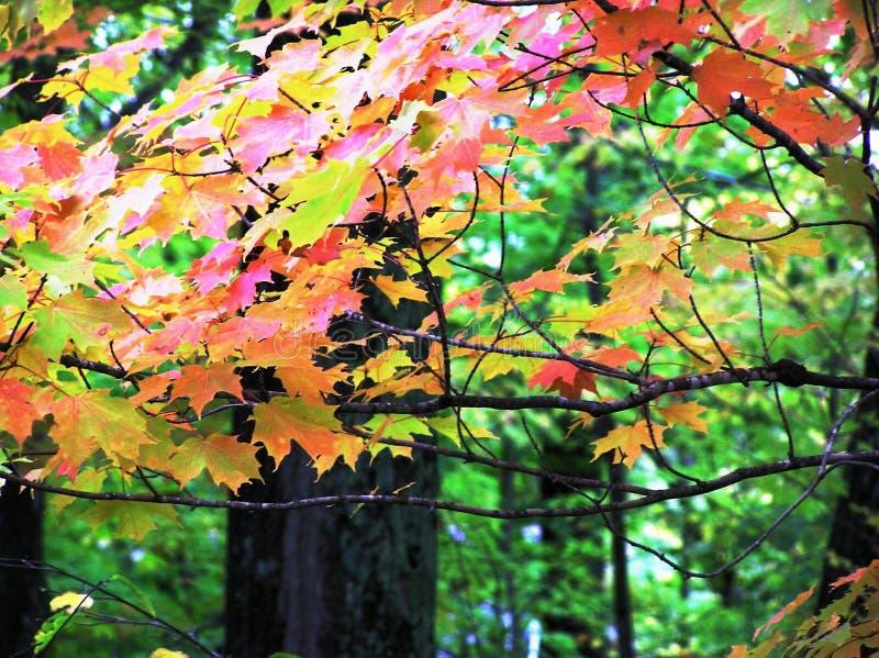 颜色季节 库存图片