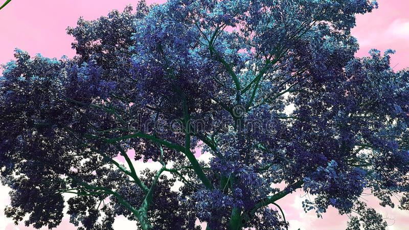 颜色树 免版税库存照片