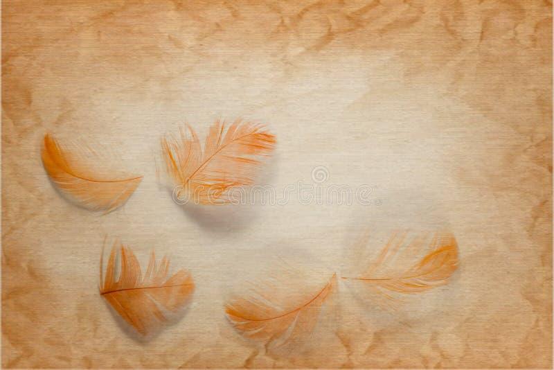颜色棕色和橙色羽毛的美好的抽象关闭在棕色和白色被隔绝的纸背景和墙纸 免版税库存图片