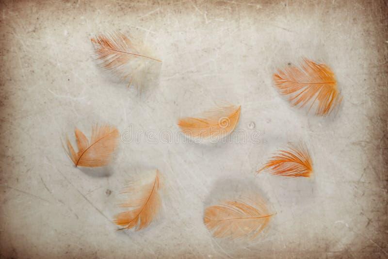 颜色棕色和橙色羽毛的美好的抽象关闭在棕色和白色被隔绝的纸背景和墙纸 图库摄影