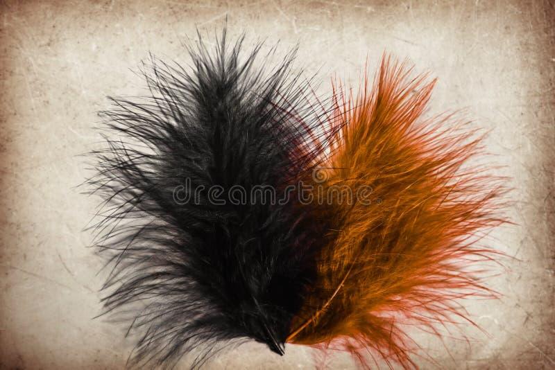 颜色棕色橙色和黑羽毛的美好的抽象关闭在棕色和白色被隔绝的纸背景和墙纸 库存图片