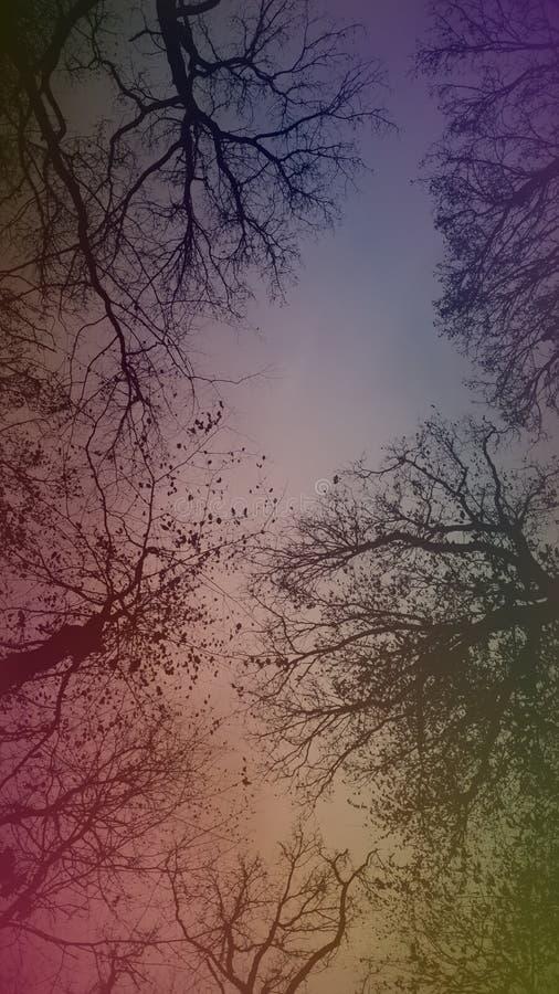 颜色森林 免版税图库摄影