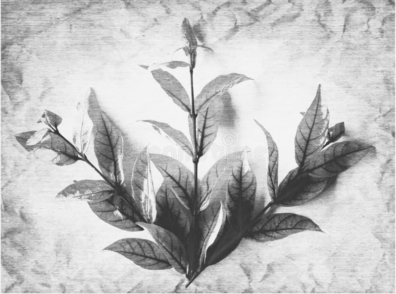 颜色白色和黑树叶子的美好的抽象关闭在白色被隔绝的背景和墙纸 库存照片