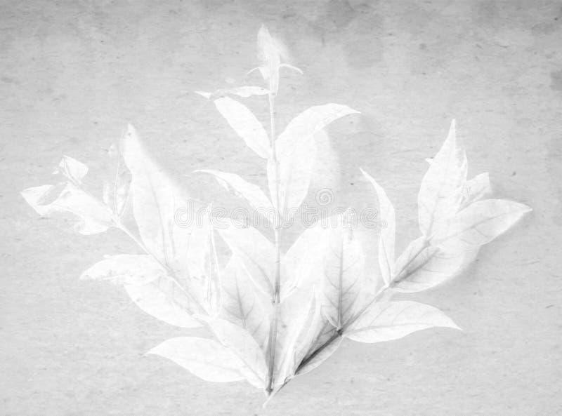 颜色白色和黑树叶子的美好的抽象关闭在白色被隔绝的背景和墙纸 免版税库存照片