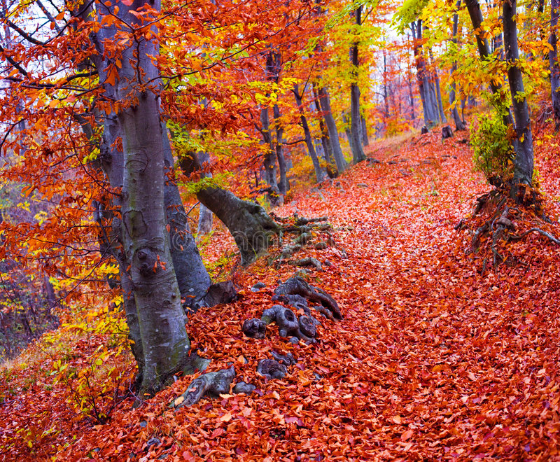 颜色秋天森林 库存照片