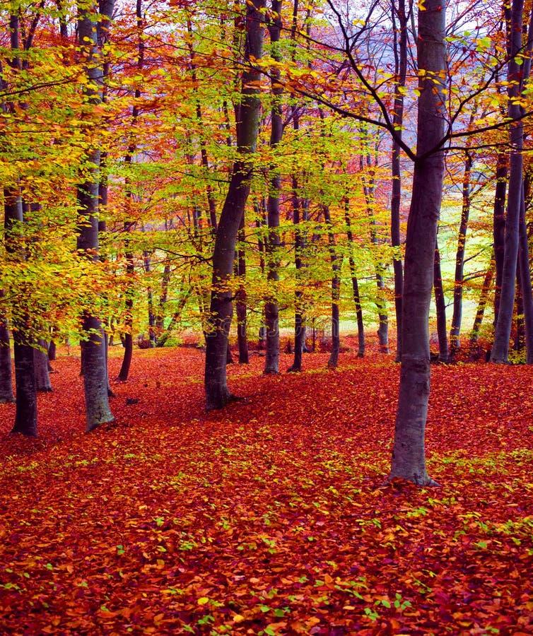 颜色秋天森林 免版税库存图片
