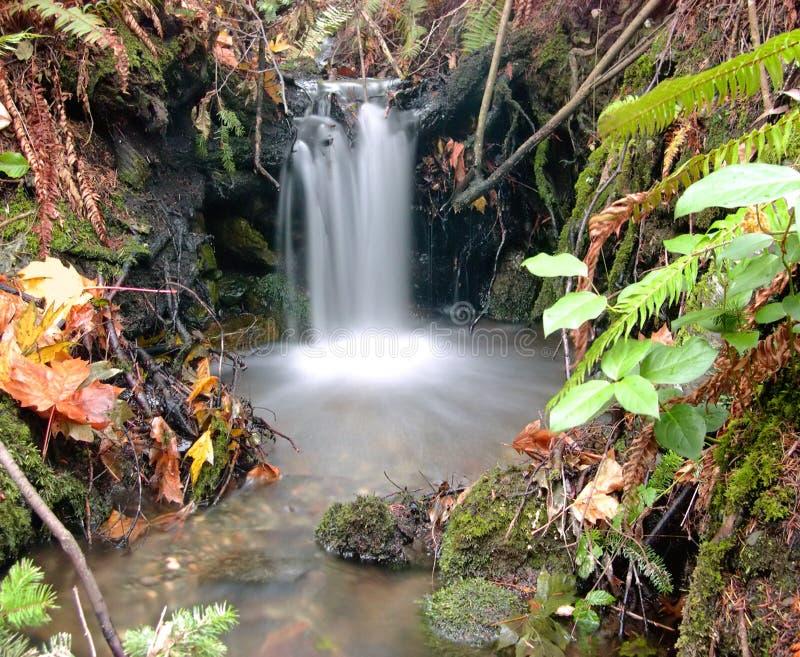 Download 颜色秋天秋天 库存图片. 图片 包括有 小河, 青苔, 秋天, 醉汉, 森林, 西北, 和平, 瀑布 - 51245