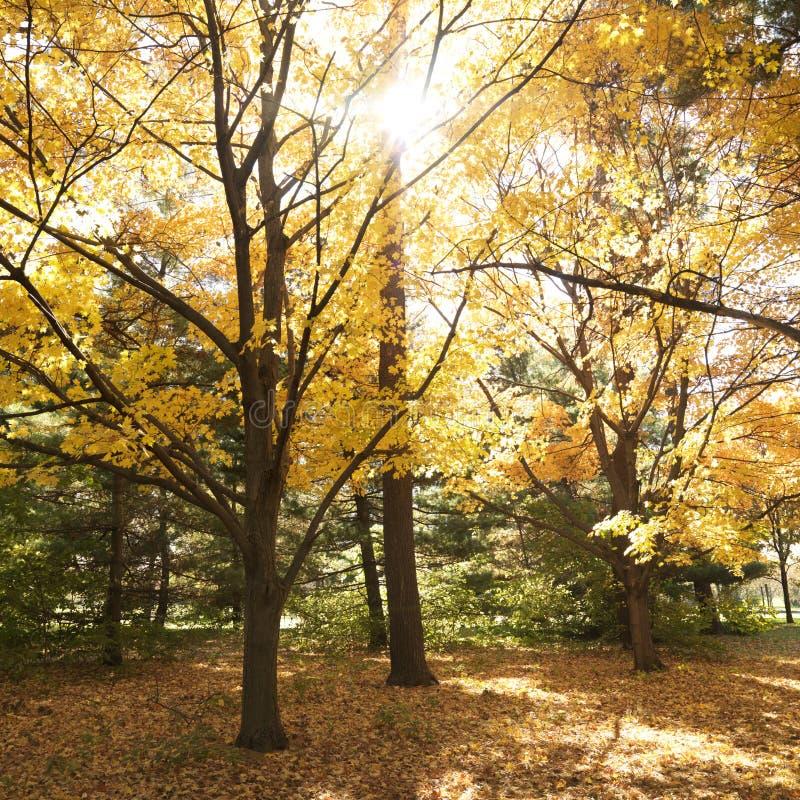 颜色秋天结构树 图库摄影