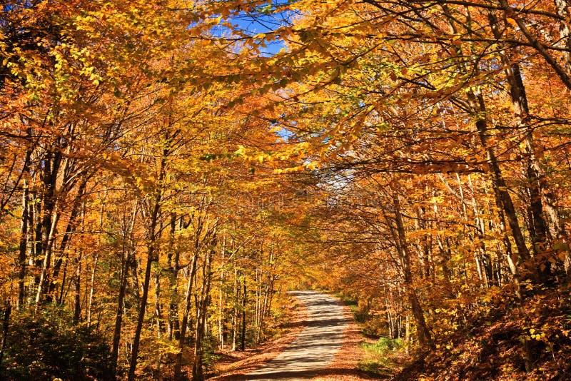 颜色美妙秋天的路 库存图片