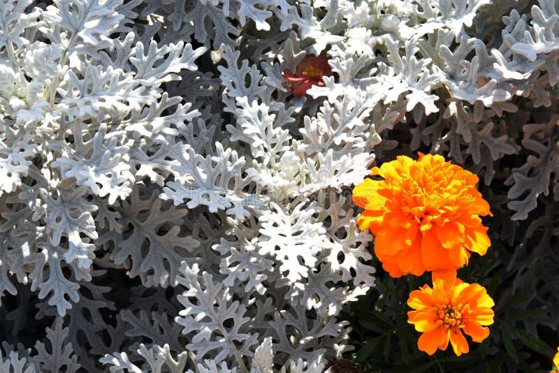 颜色花在庭院里 免版税图库摄影