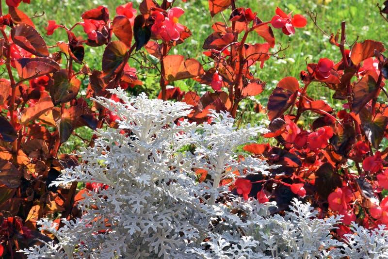颜色花在庭院里 图库摄影
