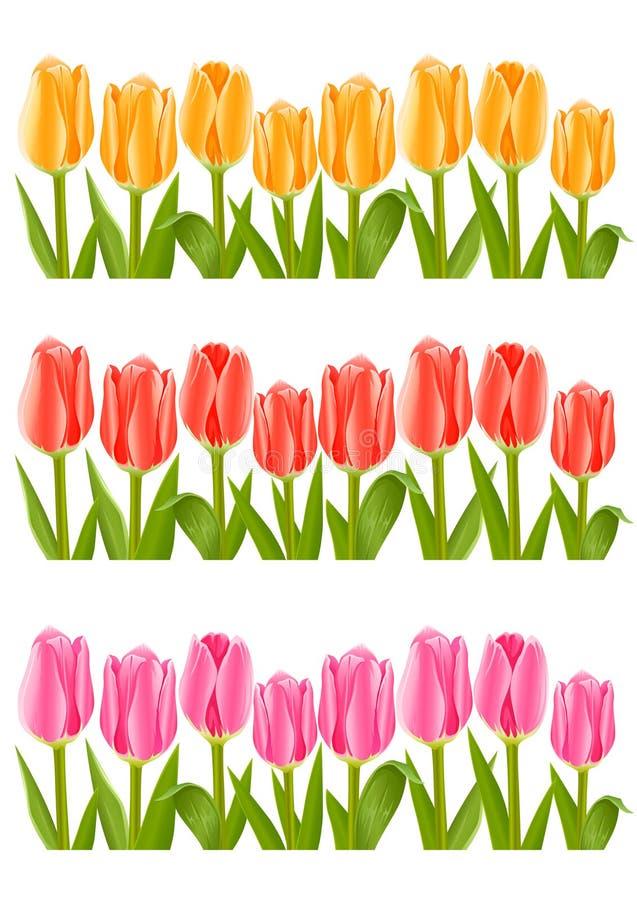颜色花设置了郁金香 皇族释放例证