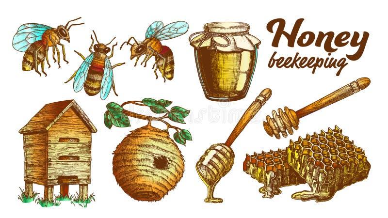 颜色蜂蜜养蜂业蜂房集合传染媒介 皇族释放例证