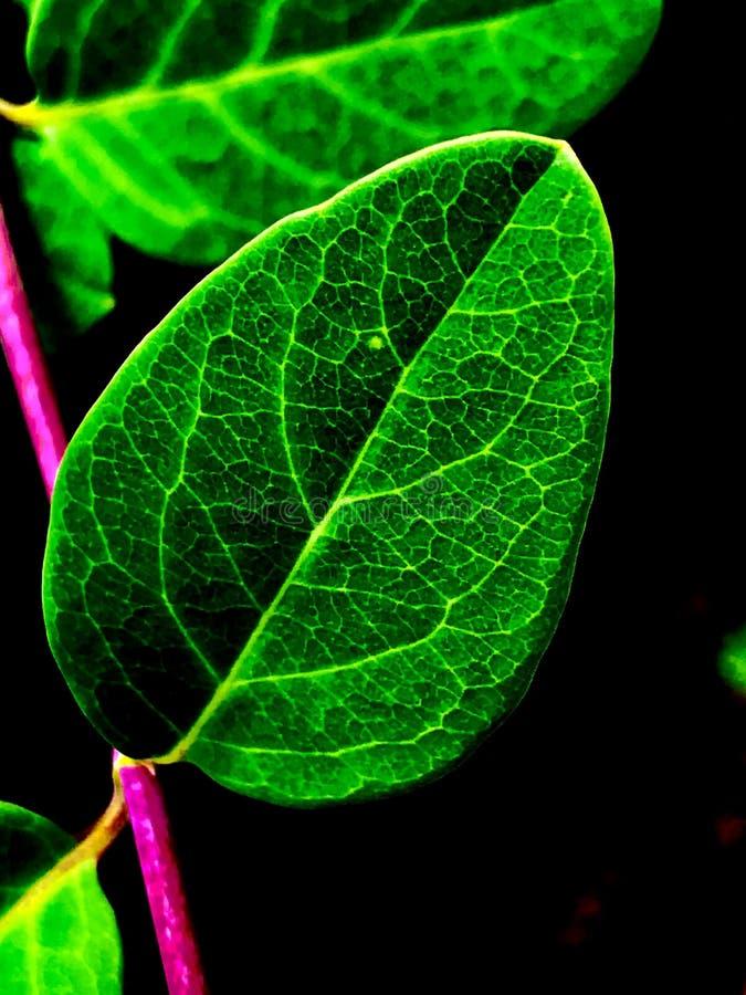 颜色饱和的和被扩大化的叶子 免版税库存照片