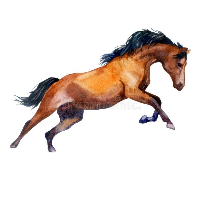 额嘴装饰飞行例证图象其纸部分燕子水彩 疾驰的马 在行动的马 库存例证