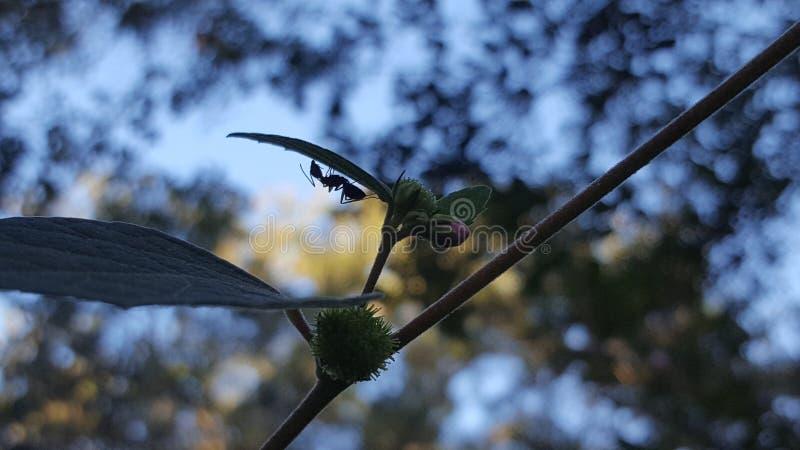 颠倒的蚂蚁 免版税库存照片