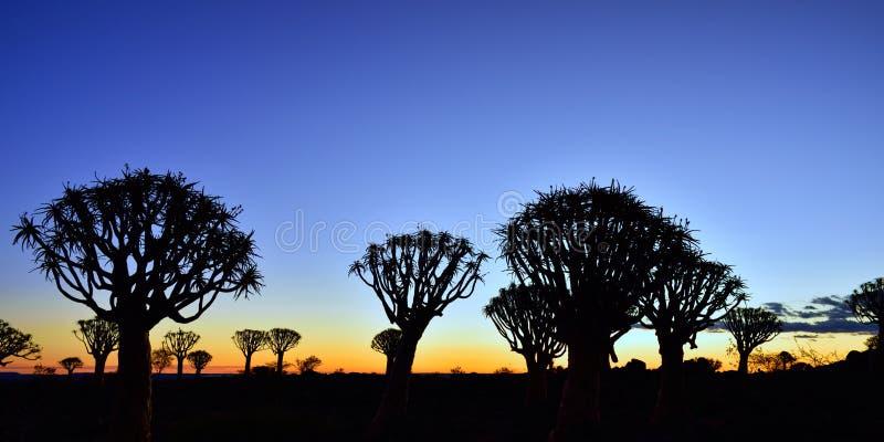 颤抖树森林纳米比亚 免版税库存照片
