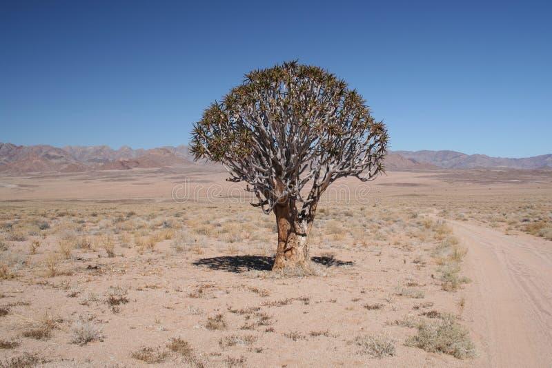 颤抖richtersveld结构树 免版税库存照片