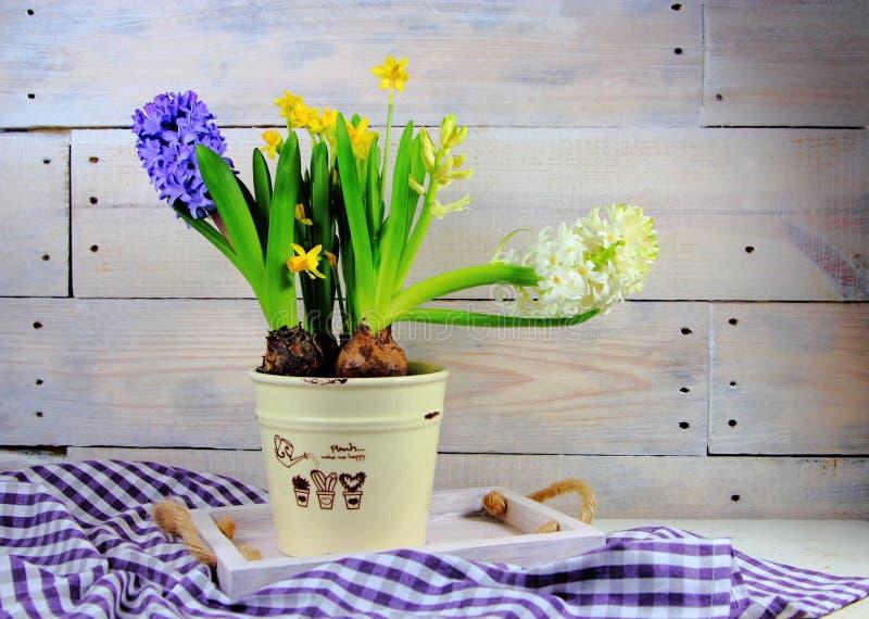 风信花和黄水仙在陶瓷罐 免版税图库摄影