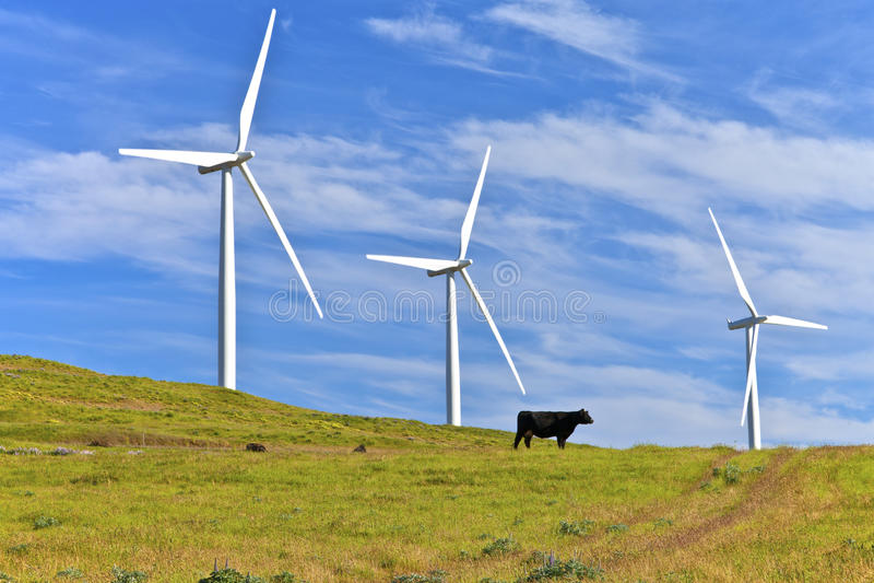 风力东华盛顿。 免版税库存照片