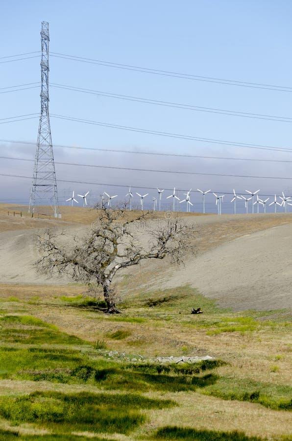 风力场在利弗摩尔金黄小山在加利福尼亚 图库摄影
