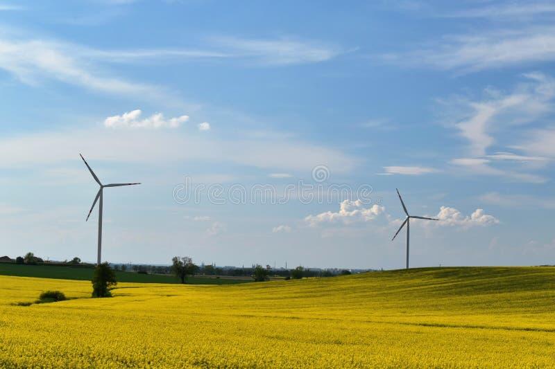 风力植物在天空蔚蓝和白色云彩背景的开花的黄色强奸领域  免版税库存照片
